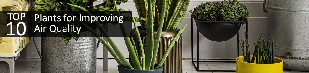 Top 10 plants for improving air quality aee for Best plants to improve air quality